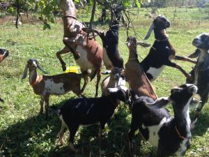 Goat coop (2)